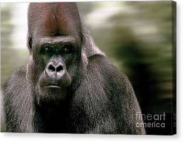 Canvas Print featuring the photograph The Gorilla by Christine Sponchia
