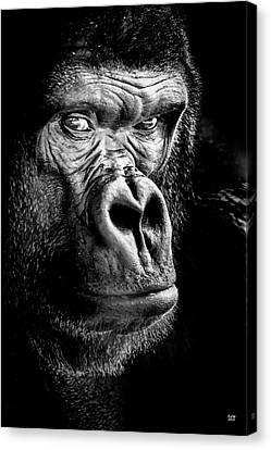 The Gorilla Large Canvas Art, Canvas Print, Large Art, Large Wall Decor, Home Decor Canvas Print by David Millenheft