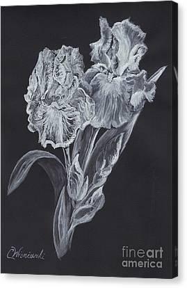 The Gossamer Iris Canvas Print by Carol Wisniewski