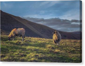 The Grass, Looking Greener Canvas Print