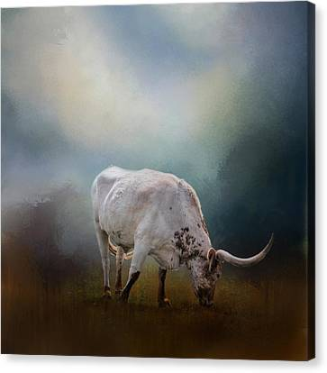 The Grazing Texas Longhorn Canvas Print