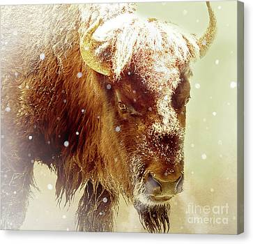 The Great Bison Canvas Print