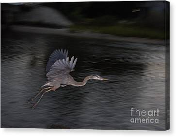 The Great Blu Canvas Print by Debbie May