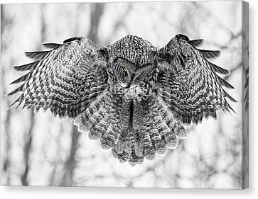 Canvas Print featuring the photograph The Great Grey Owl In Black And White by Mircea Costina Photography