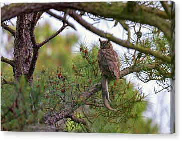 The Great Horned Owl And His Prey Canvas Print by Rick Berk