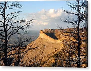 The Great Mesa Canvas Print by David Lee Thompson