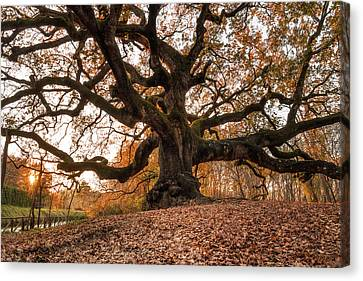 The Great Oak Canvas Print