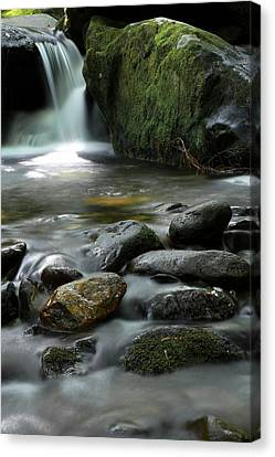 Gatlinburg Tennessee Canvas Print - The Great Smoky Mountains National Park Mossy Boulders II by Carol R Montoya