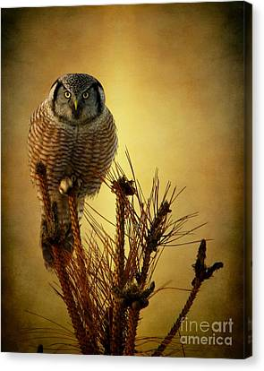 The Great Stare Down Canvas Print by Heather King