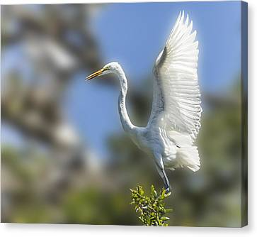 Canvas Print featuring the photograph The Great White Egret by Paula Porterfield-Izzo