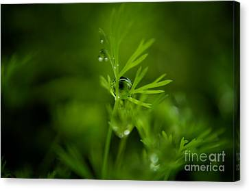 The Green Drop Canvas Print