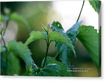 The Green Leaf Canvas Print