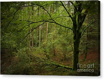 The Green Tree Canvas Print by Rikard Strand
