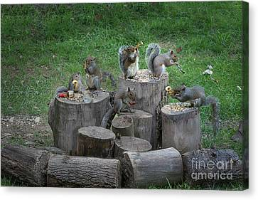 The Grey Squirrel Rowdy Band Making Some Sounds Canvas Print by Dan Friend