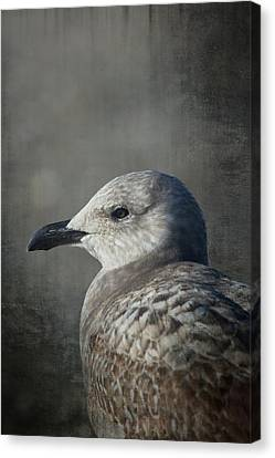 Drop Canvas Print - The Gull by Karol Livote