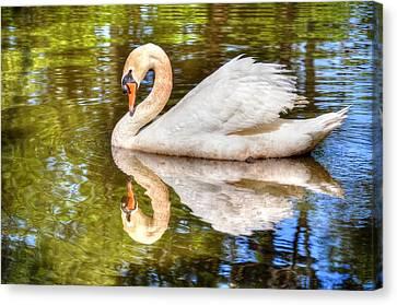 The Hammy Swan Canvas Print