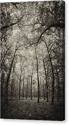 The Hands Of Nature Canvas Print