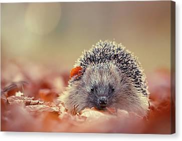The Happy Hedgehog Canvas Print
