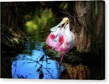 The Happy Spoonbill Canvas Print by Mark Andrew Thomas