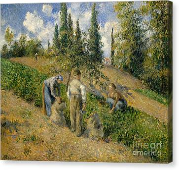 The Harvest, Pontoise, 1881  Canvas Print by Camille Pissarro