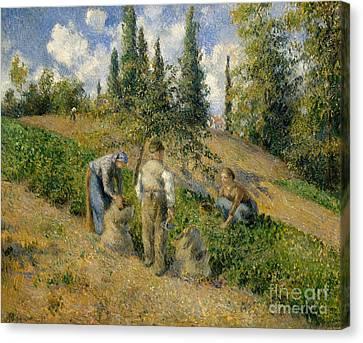 The Harvest, Pontoise, 1881  Canvas Print
