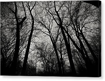 The Haunt Of Winter Canvas Print