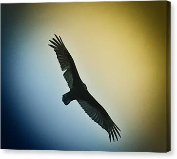 The Hawk Canvas Print by Bill Cannon
