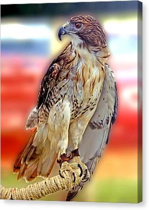 The Hawk Canvas Print by Joseph Williams