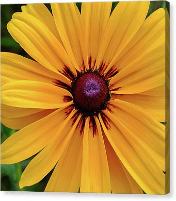 Canvas Print featuring the photograph The Heart Of A Flower by Monte Stevens