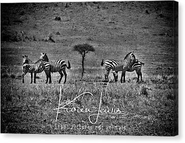 Canvas Print featuring the photograph The Herd by Karen Lewis