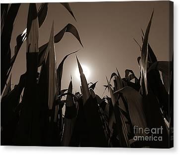 The Hiding Sun - Sepia Canvas Print