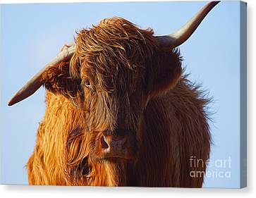 The Highland Cow Canvas Print