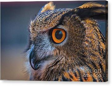 The Hooter Canvas Print