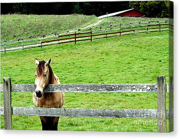 The Horse And The Red Barn . R5913 Canvas Print by Wingsdomain Art and Photography