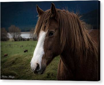 The Horse Canvas Print by Andrew Matwijec