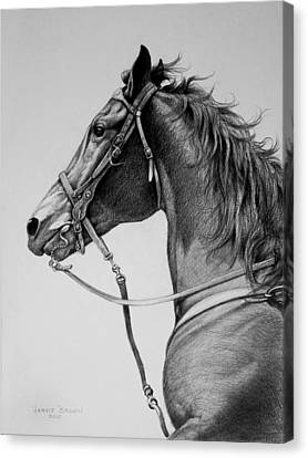 Canvas Print featuring the drawing The Horse by Harvie Brown
