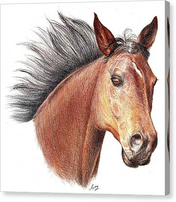 Canvas Print featuring the drawing The Horse by Mike Ivey
