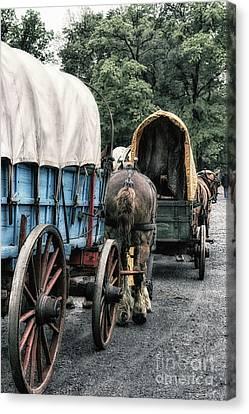 The Horse Train  Canvas Print by Steven Digman