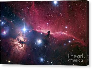 Deep Space Canvas Print - The Horsehead Nebula by Robert Gendler