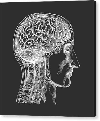 The Human Brain - White On Black Canvas Print by Village Antiques