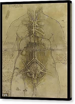 The Human Organ System Canvas Print