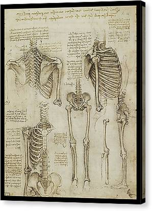 Canvas Print featuring the painting The Human Ribcage by James Christopher Hill