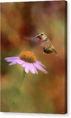 The Hummingbird Approach Canvas Print