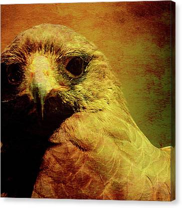 The Hunter . Portrait Of A Hawk . Square . 40d7877 Canvas Print by Wingsdomain Art and Photography