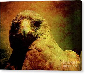 The Hunter . Portrait Of A Hawk . Texture . 40d7877 Canvas Print by Wingsdomain Art and Photography
