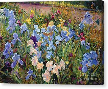 Flower Bed Canvas Print - The Iris Bed by Timothy Easton