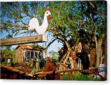 Canvas Print featuring the photograph The Iron Chicken by Linda Unger