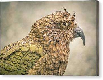 The Kea Canvas Print