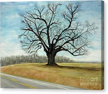 The Keeler Oak Canvas Print