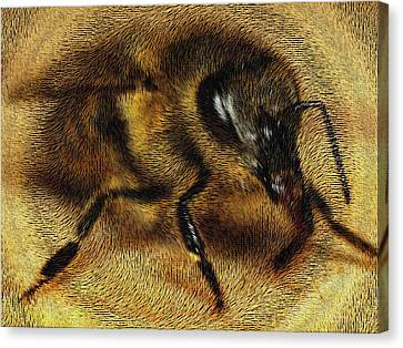 The Killer Bee Canvas Print by ISAW Gallery